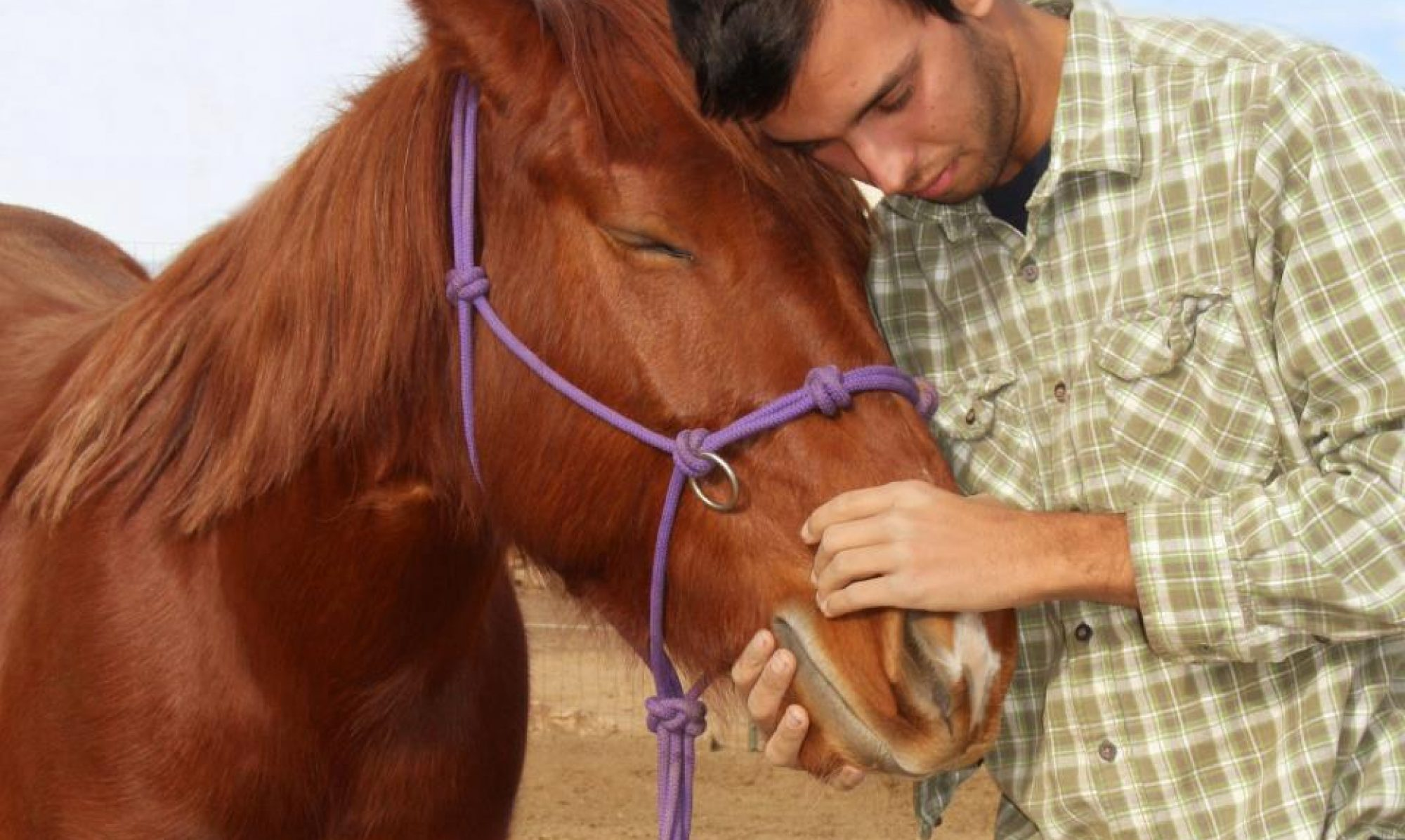 The Gentle Equine Touch,LLC